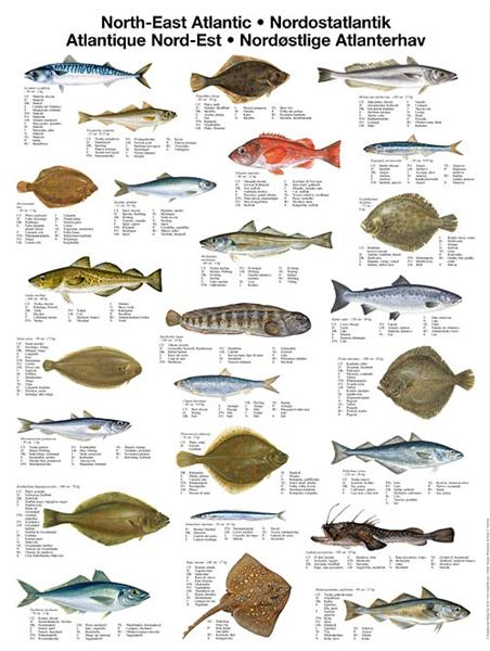 Ferskvannsfisk norge